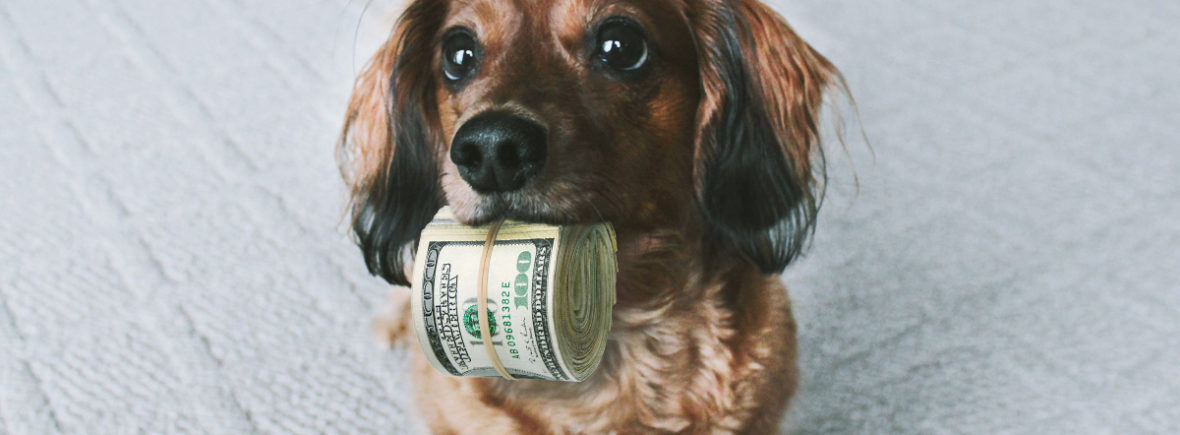 Teckel avec des billets de banque dans la gueule
